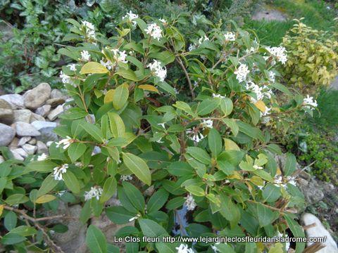 """Mon jardin """"Le Clos fleuri en Avril ....."""