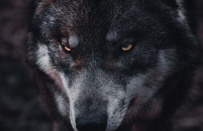 La colère et les cris