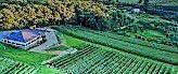 #Blush Wine Producers Pennsylvania Vineyards