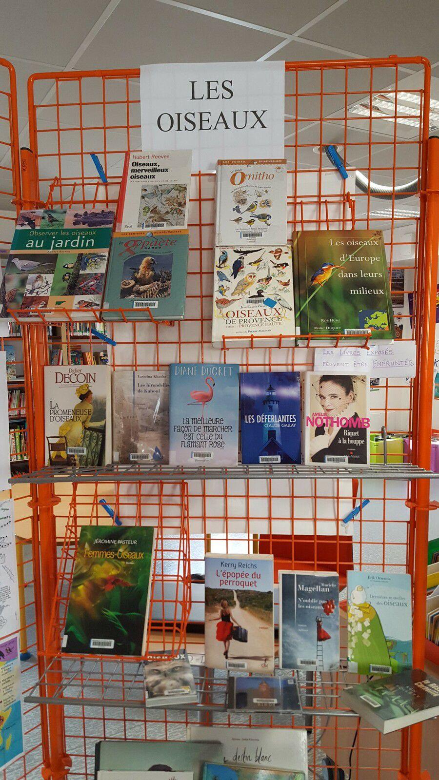Saint André les Alpes: Exposition sur les oiseaux