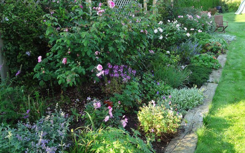 Balade parmi les roses (2)