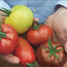Dans le Point, M. Jean-Paul Pelras nous explique « Pourquoi Macron a eu raison de visiter une serre de tomates »