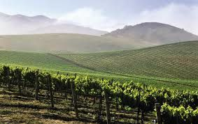 Vineyards in Central Coast of California