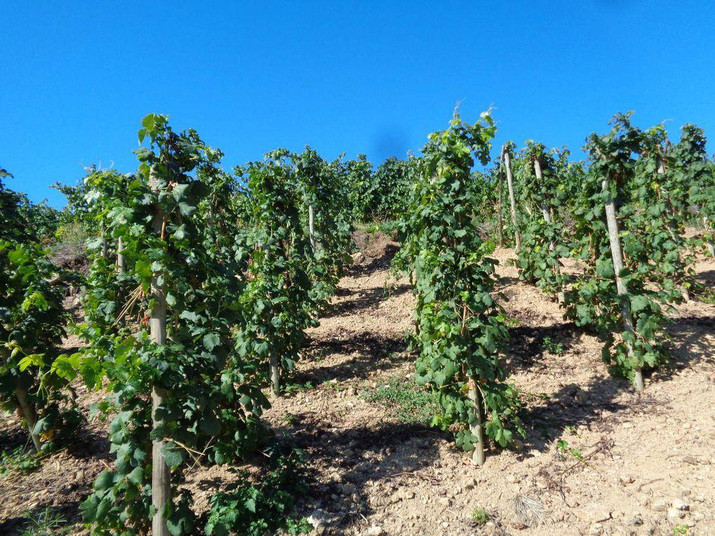 Beaucoup de vignes dans le coin .....