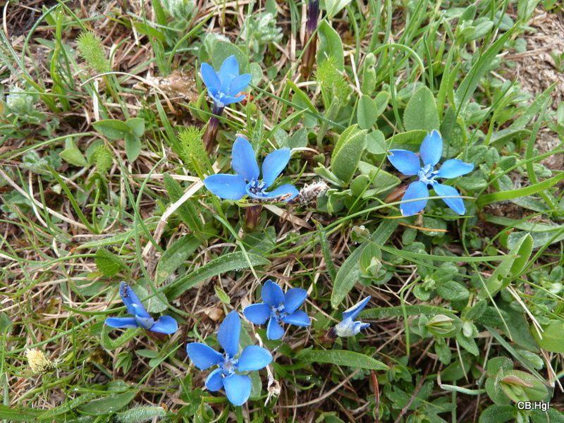 Fleurs photographiées lors de nos balades en C-Car.