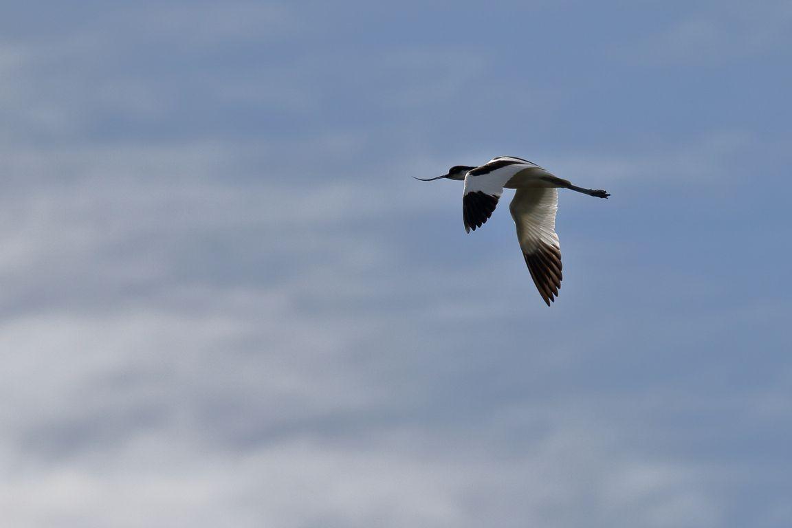 Quand les oiseaux volent si haut ... qu'ils se retrouvent au-dessus des nuages !