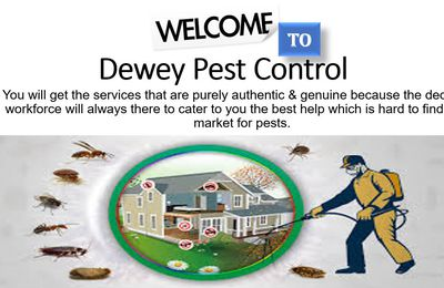 Take Back Control of Your Home with Dewey Pest Control Services