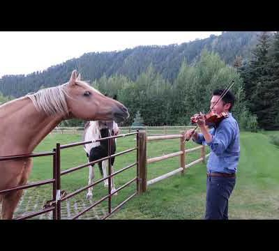 Horses like violin playing