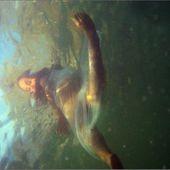 Immersion de Aella - Fatia Djemani