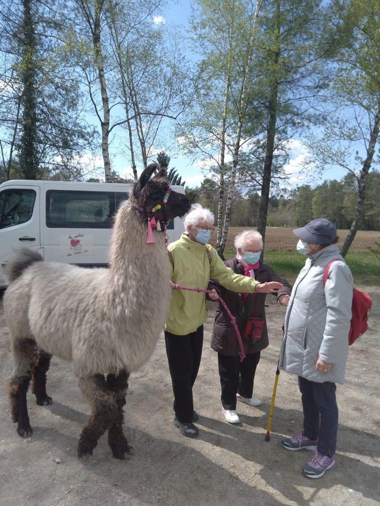 Promenade avec les lamas de Jasseron