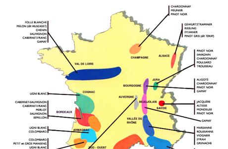 Les grandes régions viticoles françaises et leurs principaux cépages