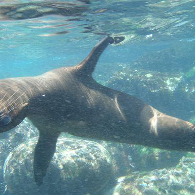Galapagos: isla San Cristobal