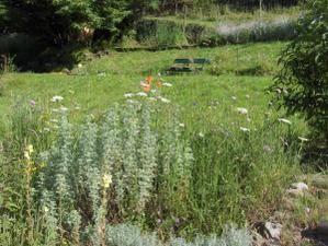Floraisons au jardin de mi-juin à fin août...