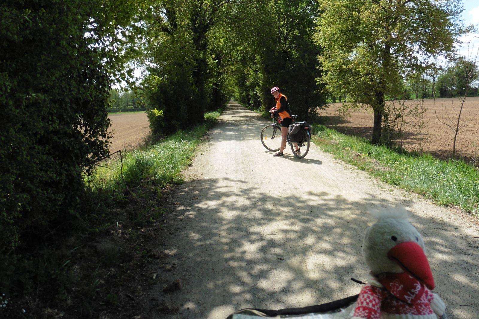 Boucle locale - La verte campagne - 33,6 km