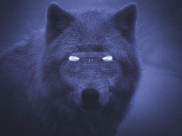 Pub de la semaine : VOLVO se prend pour un animal sauvage !