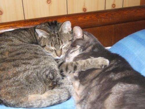 Félix & Mickey