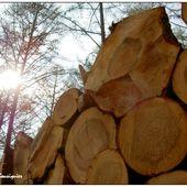 pin tranché...ou l'essence de la vie à terre - Images du Beau du Monde