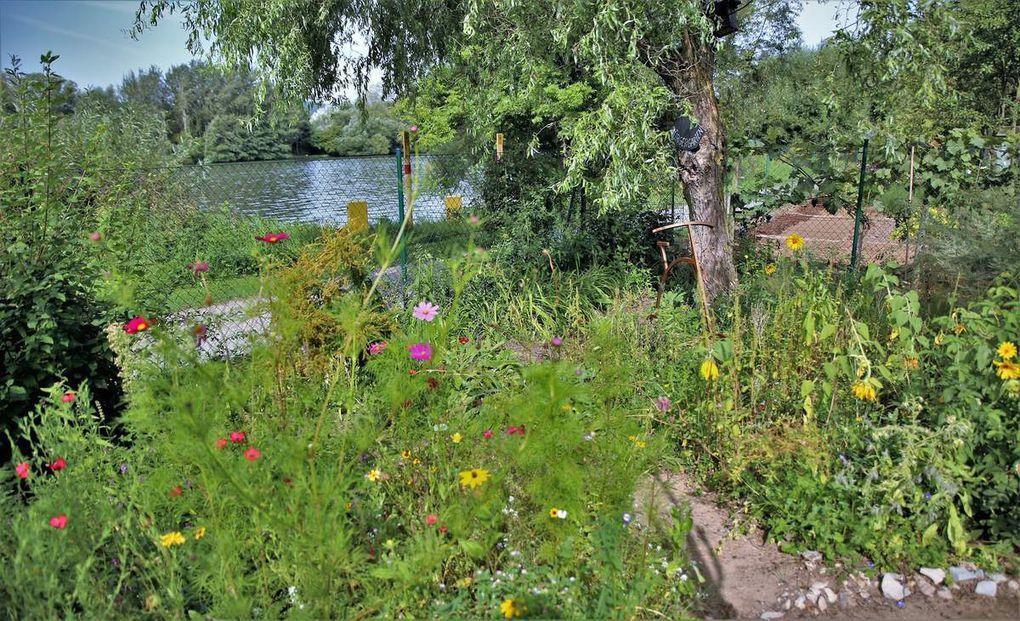 Zum Main hin konnten die Kinder auf der nördlichen Gartenseite eine bunte Blumenwiese durchschreiten, die eigens für Schmetterlinge und Bienen angelegt wurde, was diese wahnsinnig angenommen hätten.
