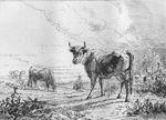Pâturage, eau-forte de Servin (1868) d'après Brascassat