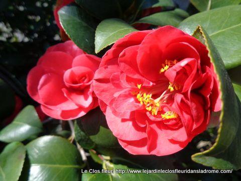 """Mon jardin """"Le Clos fleuri """" en mars"""