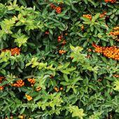Orange de saison..