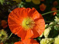 Monet - Les jardins de Giverny - Photos: Lankaart (c)