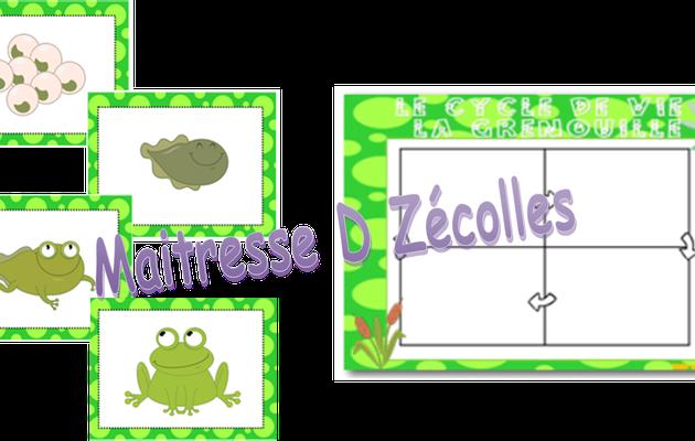 Cycle de vie d'une grenouille / Papillon