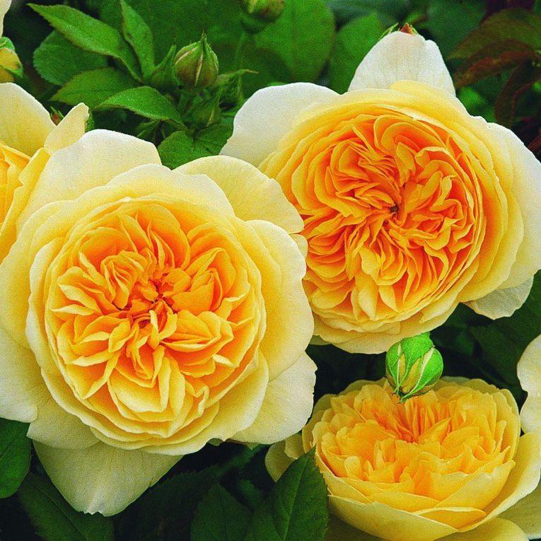 photo site promesse de fleurs