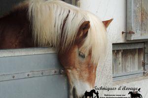 Impact de l'utilisation d'un bloc de minéraux sur la nutrition des chevaux
