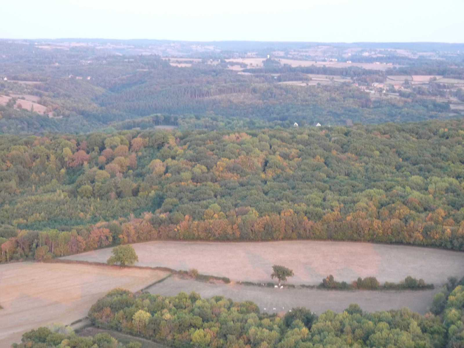 La forêt souffre comme le montre ses couleurs alors que nous ne sommes pas encore en automne.