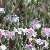 c1. Les vivaces - plaisir-jardin.com