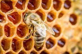 Le miel et les manières de le décrire