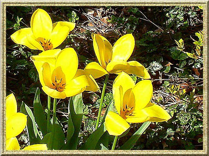 mes photos de fleurs, au fil des articles