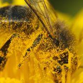 Entrainer les abeilles à survivre ? - Le blog de imagiter.over-blog.com