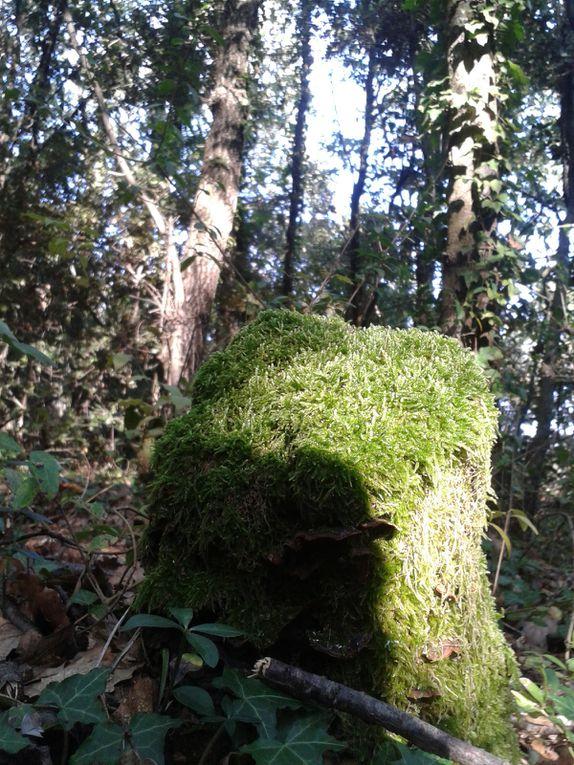 L'abondance est autour de nous, partout, ici, ce sont les châtaignes offertes par la généreuse nature.