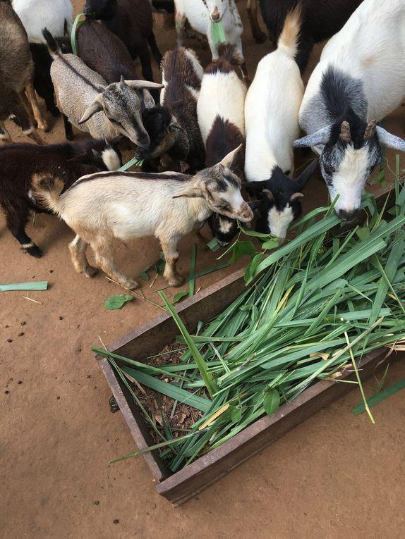 des images de notre dernière mission de mai 2019 de visites d'élevage