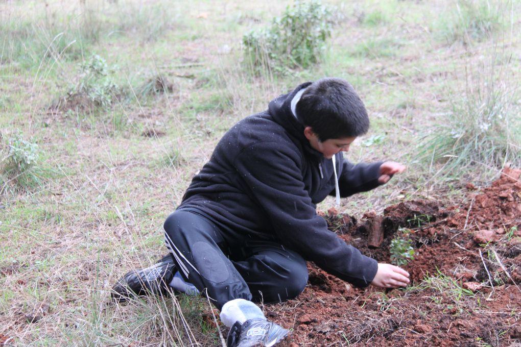 Album - Reforestacion-23ENE11