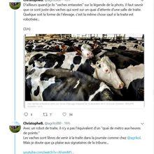 Tribune anti-élevage : c'est qui l'auteur ? Et quel est l'objectif ?