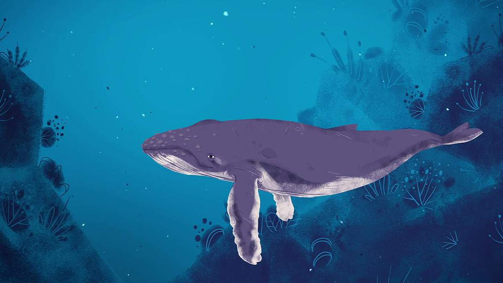 "Screenshot of the short film ""Why do whales sing?"" from Stephanie Sardelis for TED-Education"