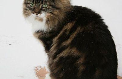 ^^Cat-Blogging # 243^^