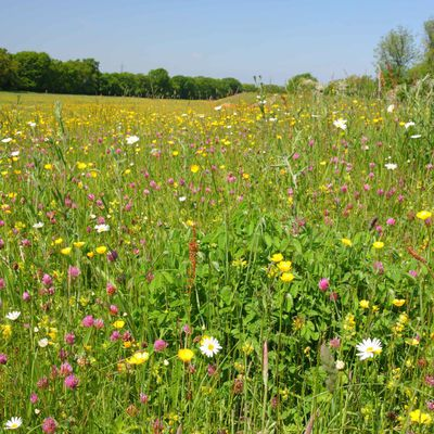The meadow is so beautiful.