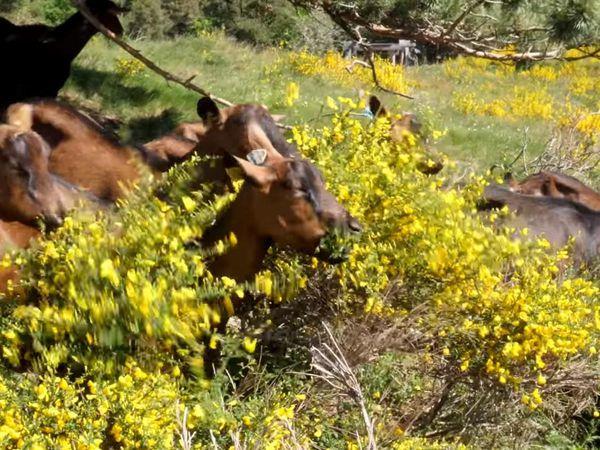 Images extraites du documentaire ''L'agroécologie, des paysans avec la nature'' (Cliquez pour agrandir)