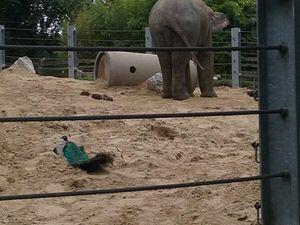 Centre Jean Zay: Zoo de Maubeuge 27/07/2017