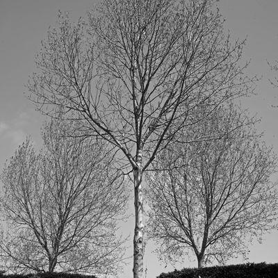 L'arbre …