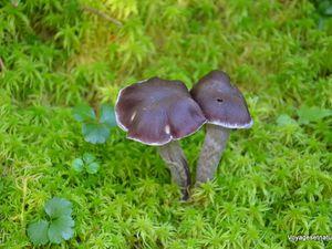 Des champignons partout !
