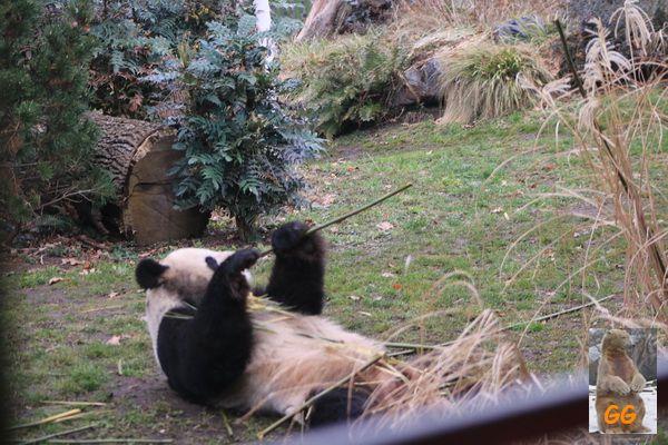 Besuch Zoo Berlin 28.02.2021