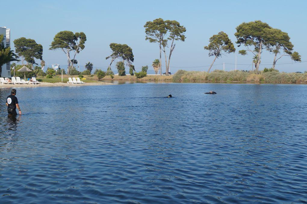 travail à l'eau dans un étang d'eau salé