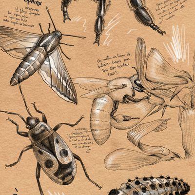 Croquis et illustrations naturalistes : abeille, crabe & coquillages