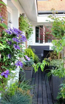 Misterbricolo prend soin de ses plantes d'intérieur...