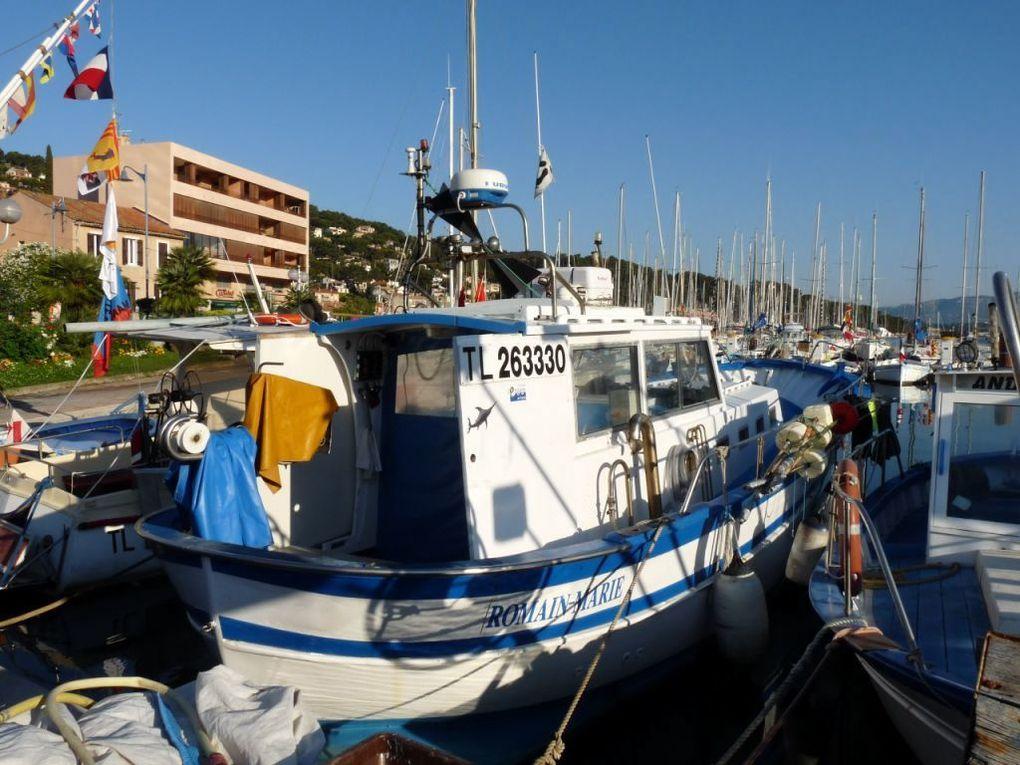 ROMAIN  MARIE  TL 263330  , dans le port de Saint Mandrier